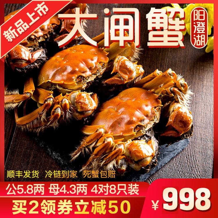 【活蟹礼盒】阳澄湖大闸蟹鲜活现货礼盒 公5.8两 母4.3两 4对8只装